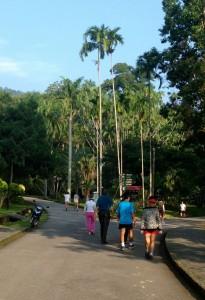 Morning fitness in Georgetown Botanical Gardens, Penang